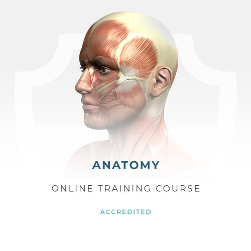 Anatomy and Physiology of Skin - Aesthetics Accreditation International