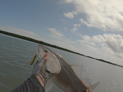 Target Redfish on Topwater Lures