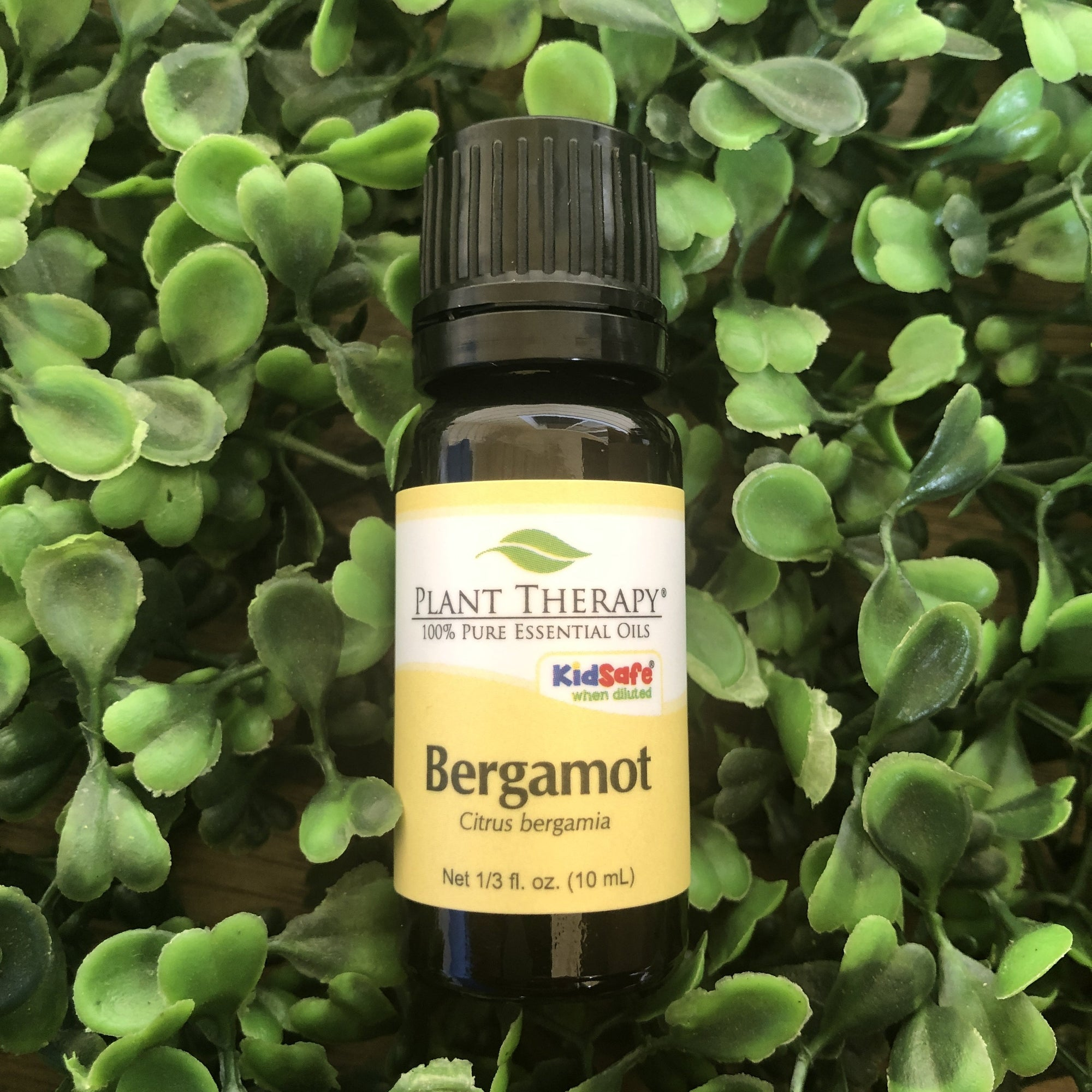 Bergamot Organic Essential Oil - Essential Oil