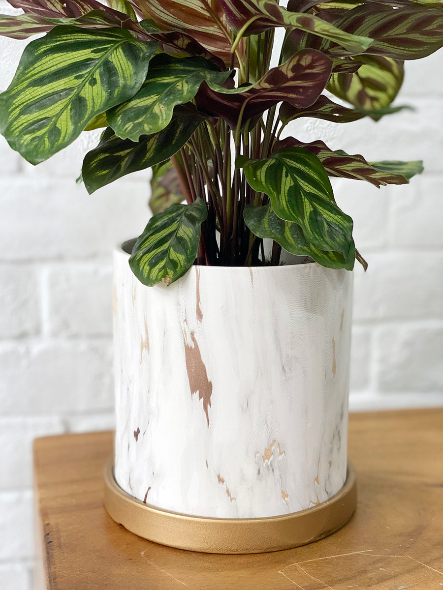 Modernist Marble Collection : Calathea in White Round Planter