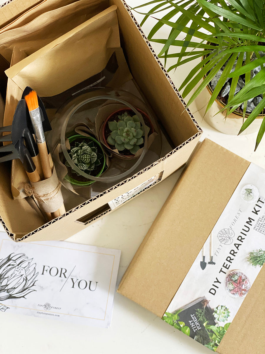 DIY Terrarium Kit Combo (1 Adult + 1 Kids)