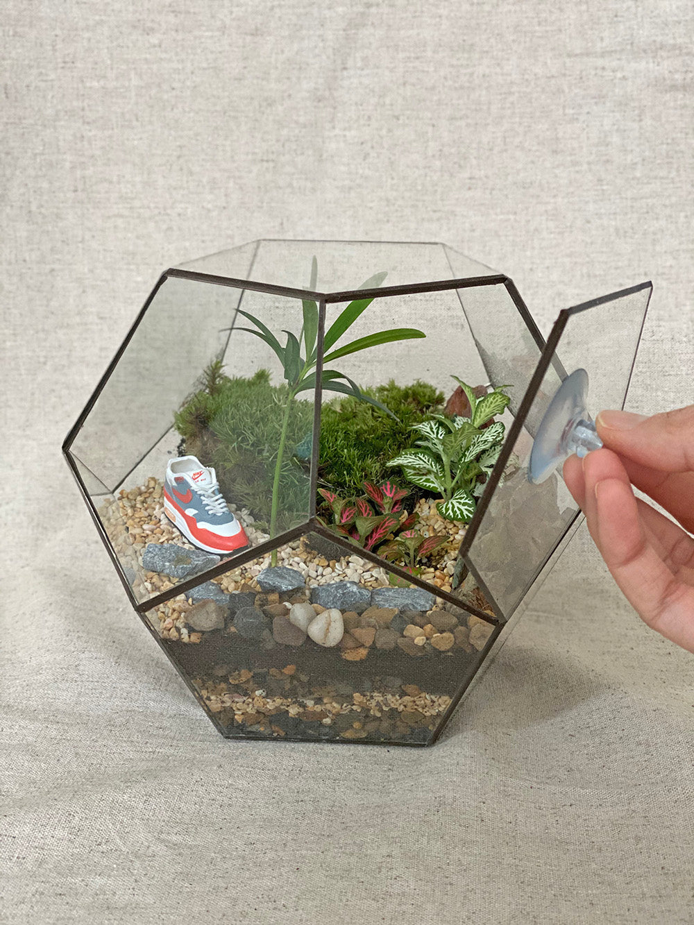 Airmax Closed Terrarium With Plants Tiny Forest Store