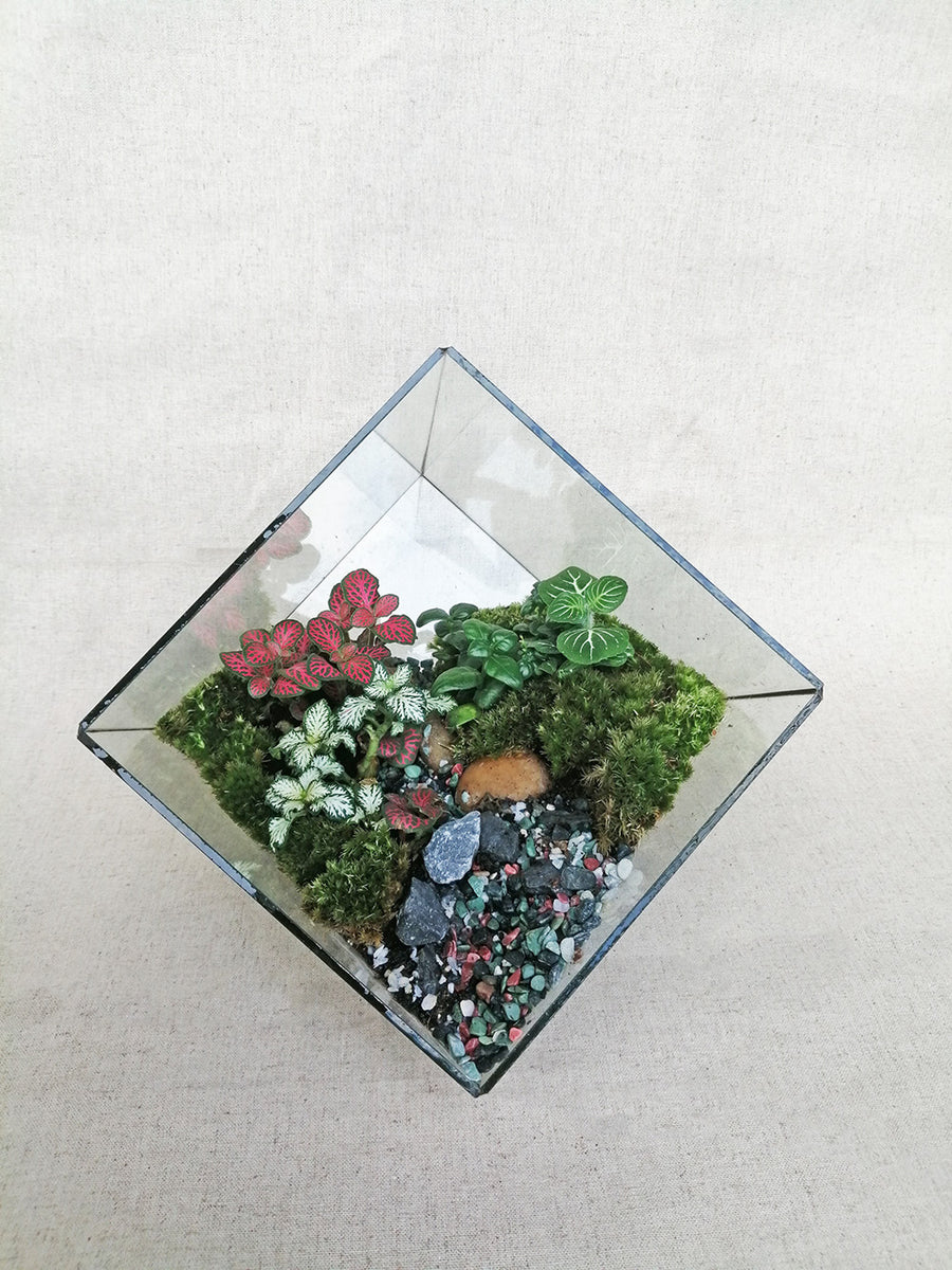 Cube Terrarium with Fittonia and Moss