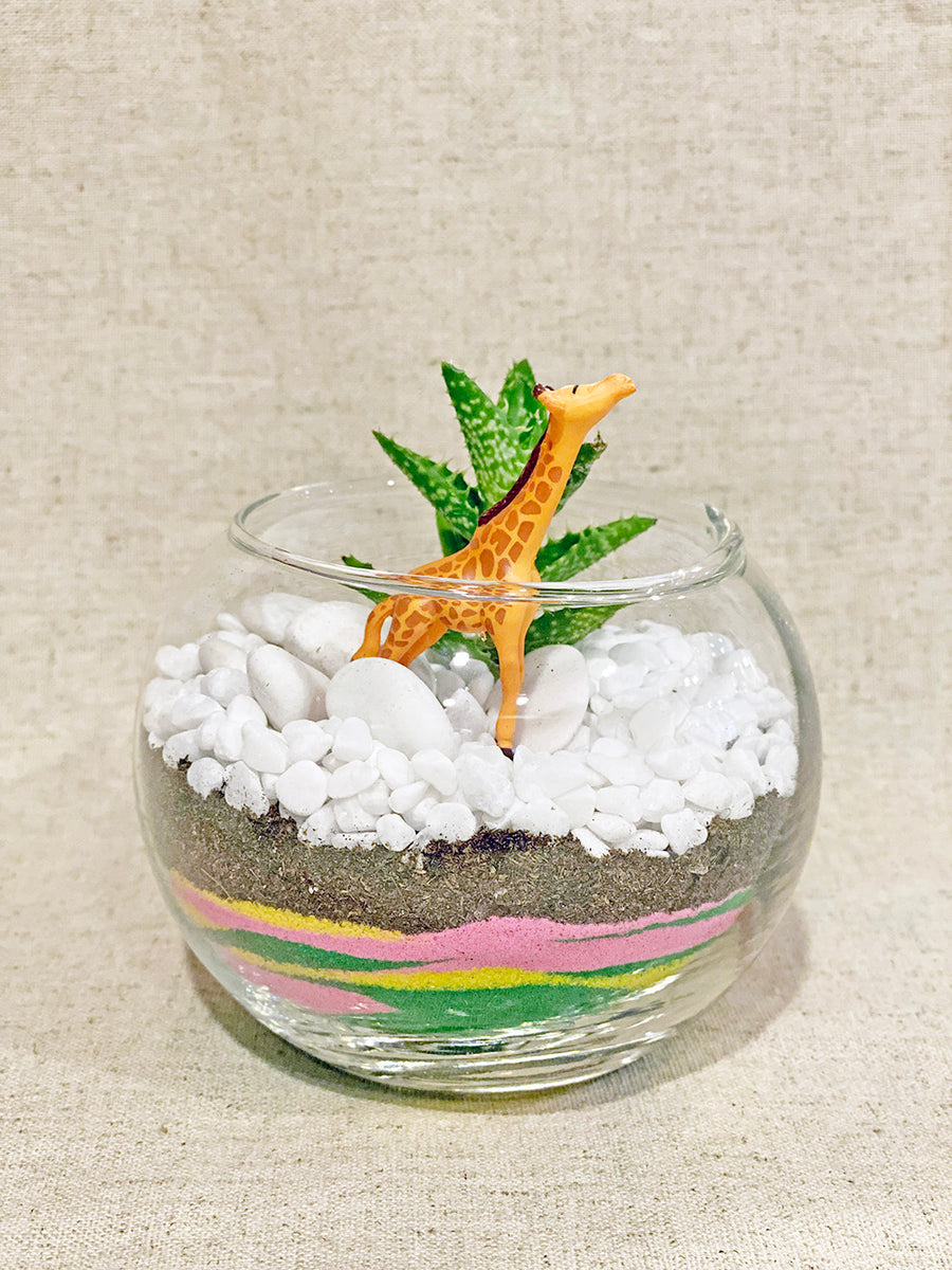 New DIY Sand Art Terrarium Kit for KIDS