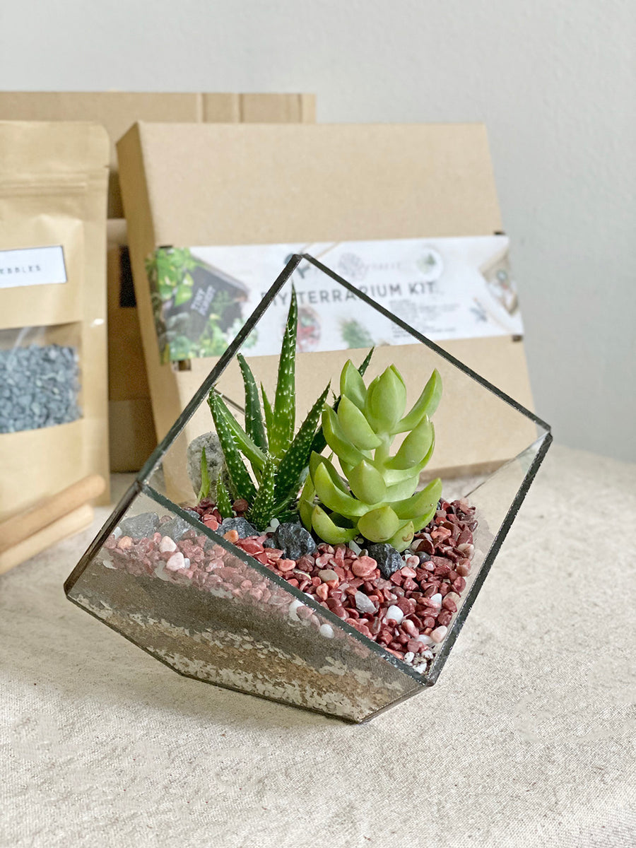Tiny Forest DIY Cube Terrarium Kit