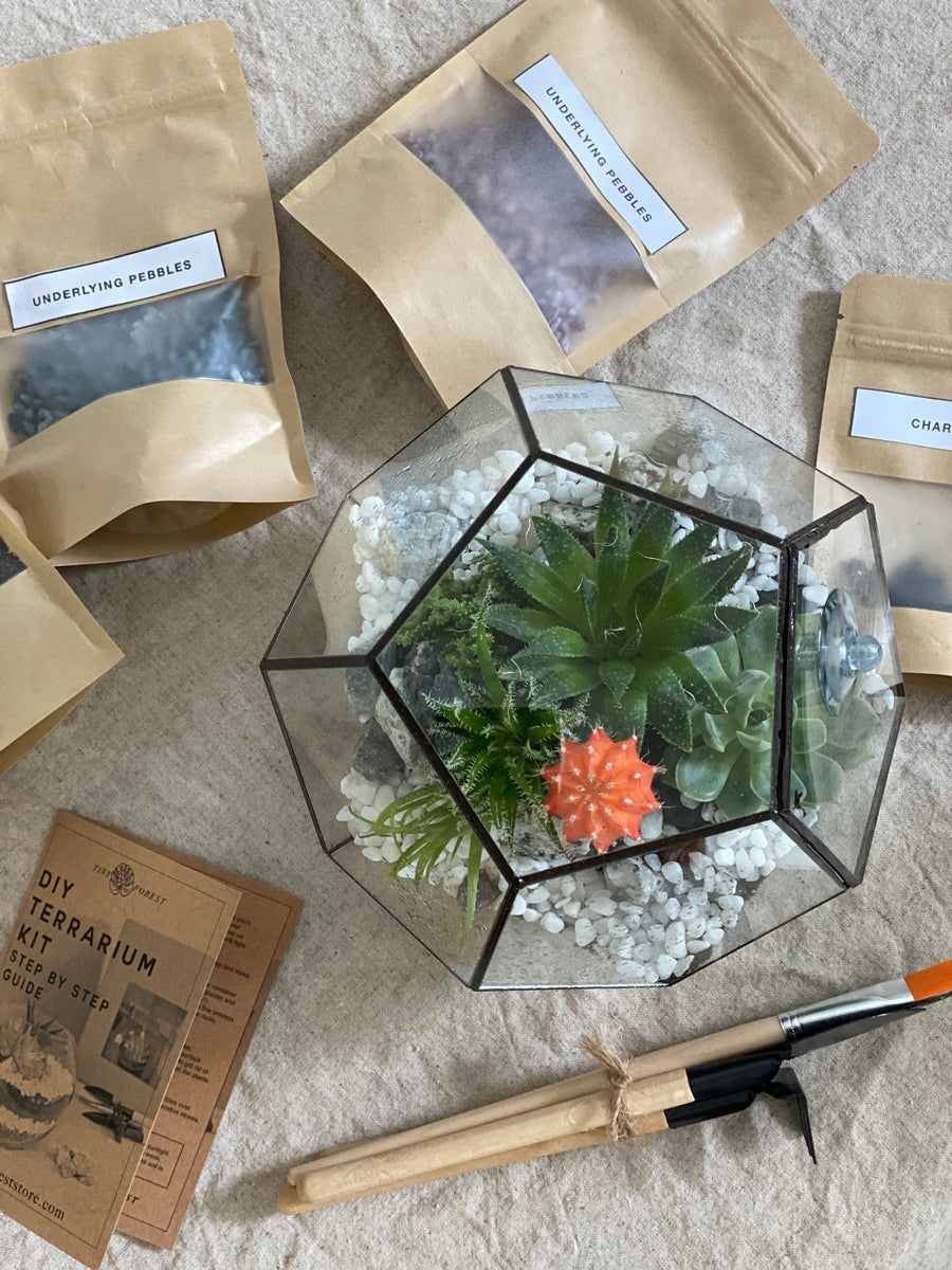 Tiny Forest DIY Pentagon Terrarium Kit