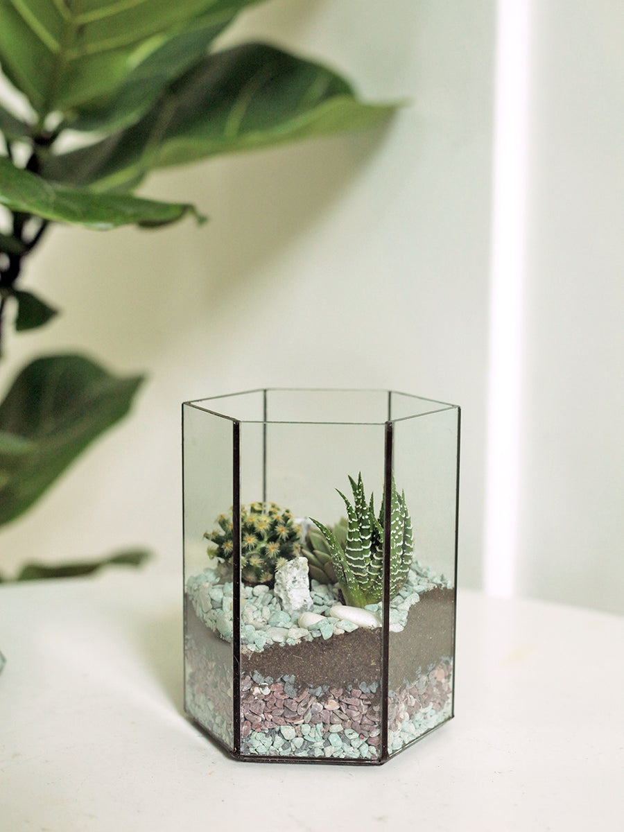 Tiny Forest Hexarium