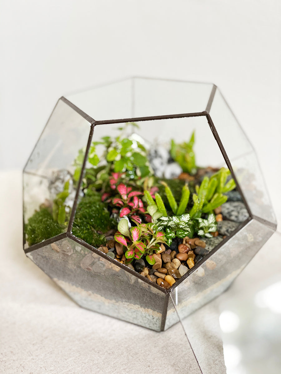 Small Pentagon Closed Moss Terrarium Tiny Forest Store