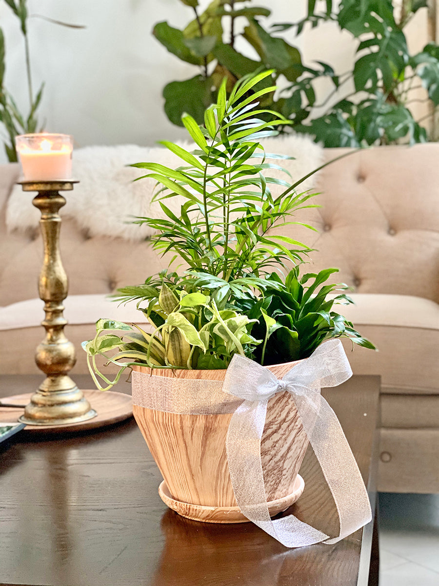 Natural Feel : Mixed Plants in Wooden Planter