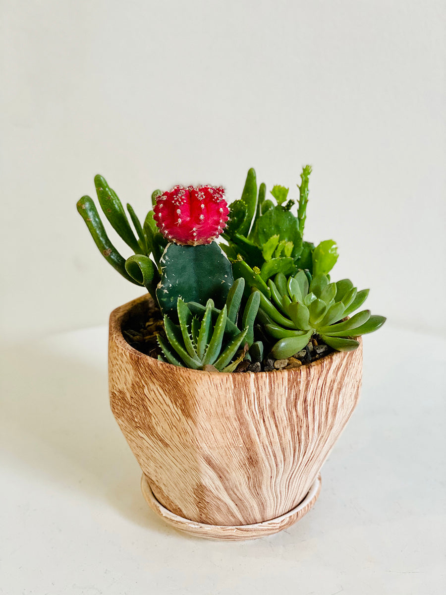Mixed Succulents in Small Wooden Planter