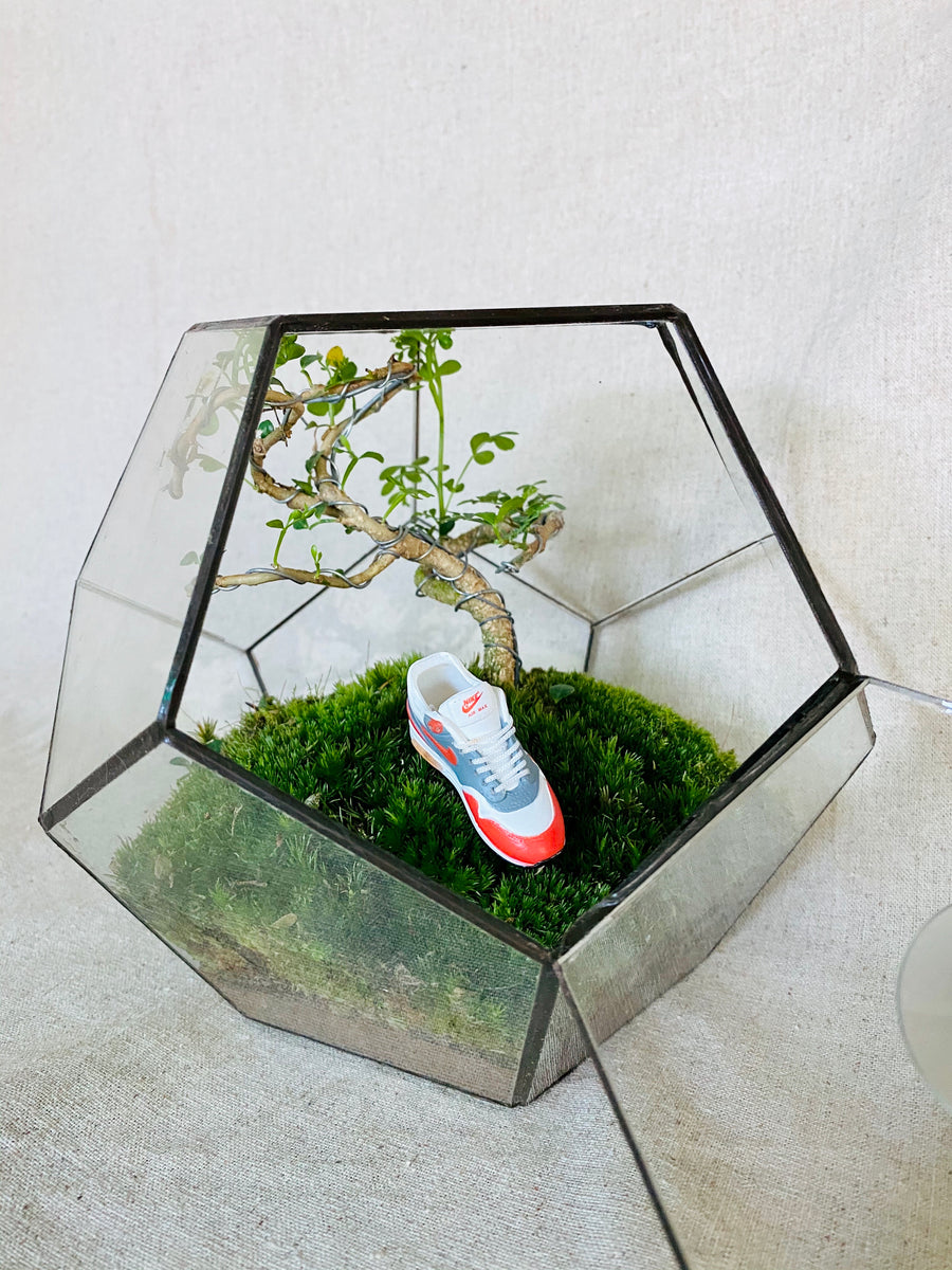 Airmax Closed Terrarium with Bonsai Tree