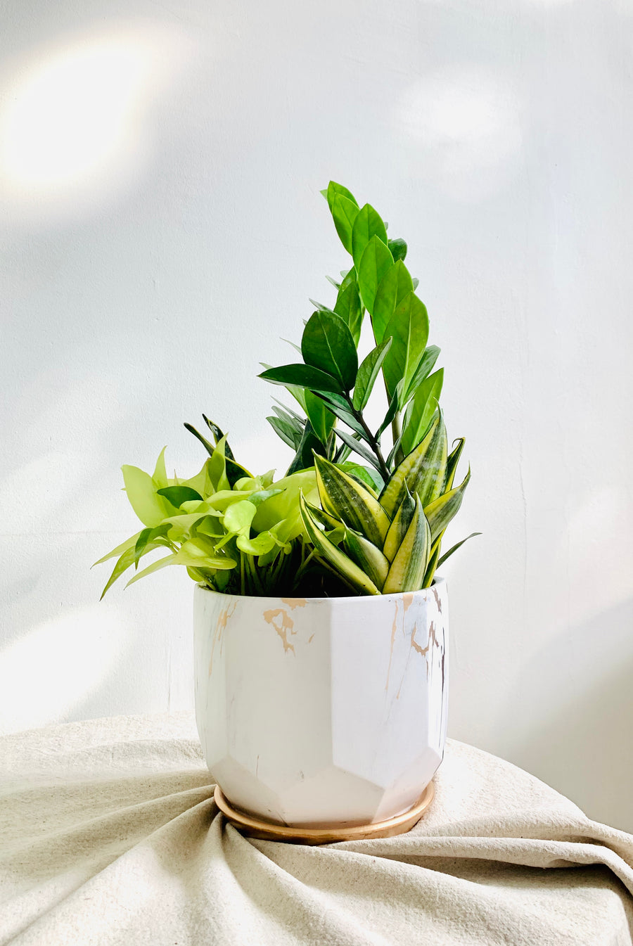Serene Marble Collection : Mixed Plants in Large Planter