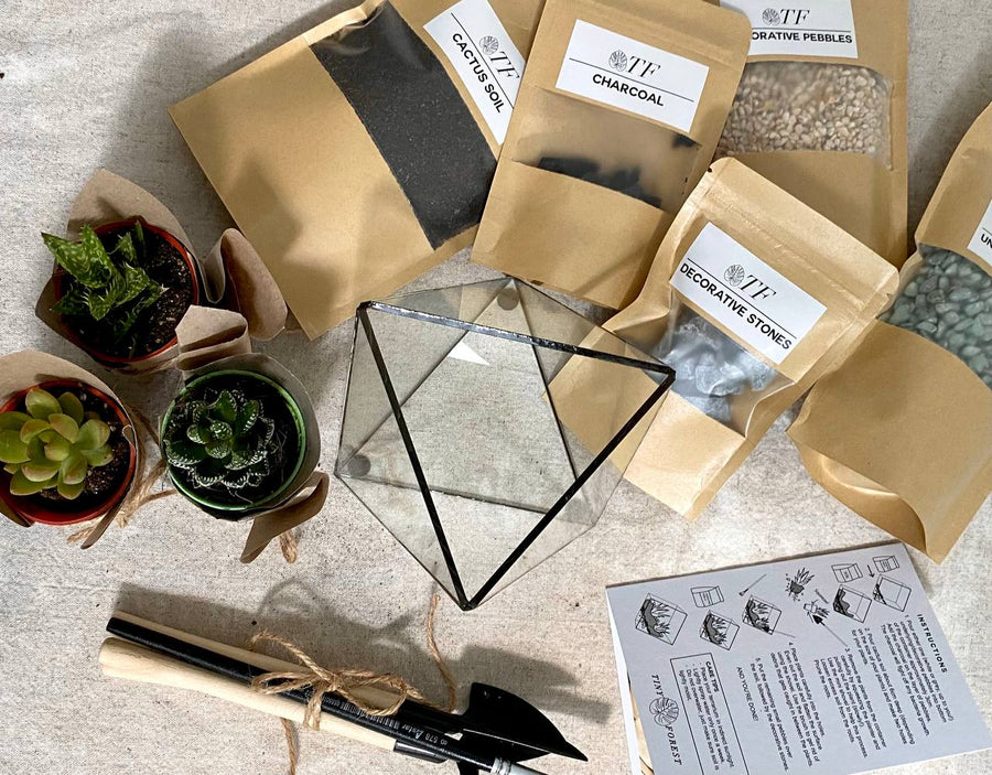 Tiny Forest DIY Trigonal Terrarium Kit