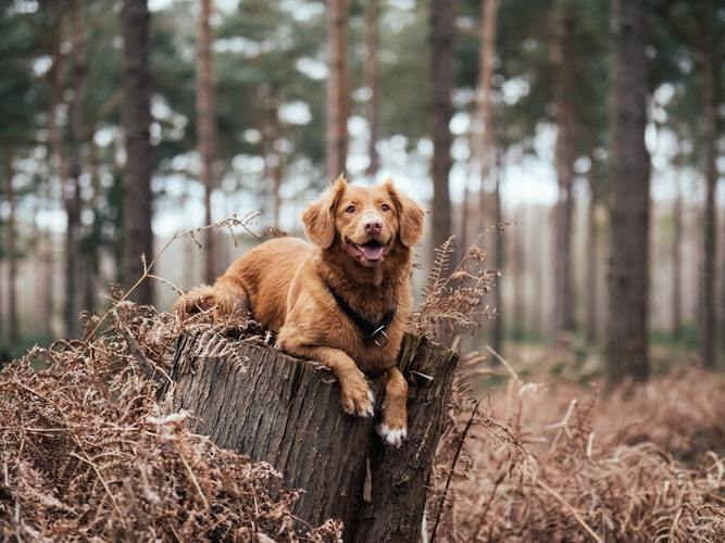 What Are The Benefits Of CBD Oil For Dogs?