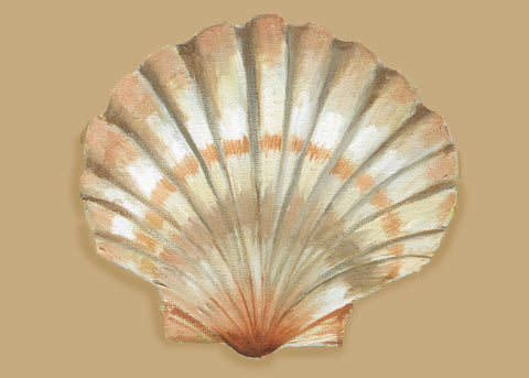PM136 Shell Paper Placemats
