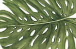 PM105 Palm Frond