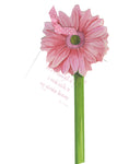 GAW936W Gerber Daisy Greeting Card