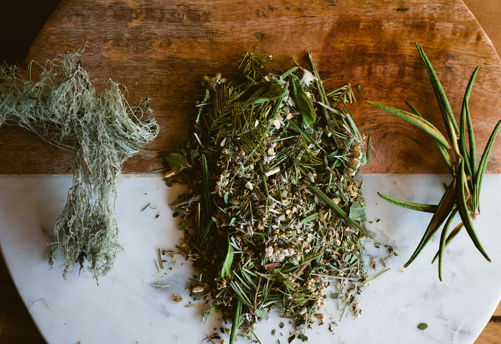Douglas Fir with Labrador Tea in Cold and Flu Tisanes