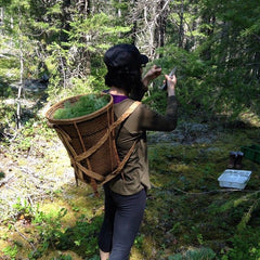 Izumi foraging with Namasthé team a beautiful basketful of Douglas Fir tips