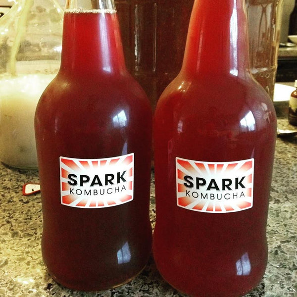 Spark Kombucha Tea supplier