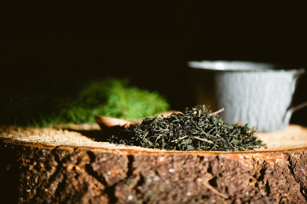 Jade Fir Tea with Douglas Fir Spring Tips