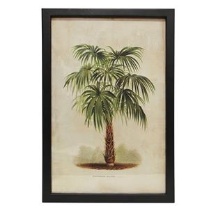 Broad Leaf Palm Wall Art