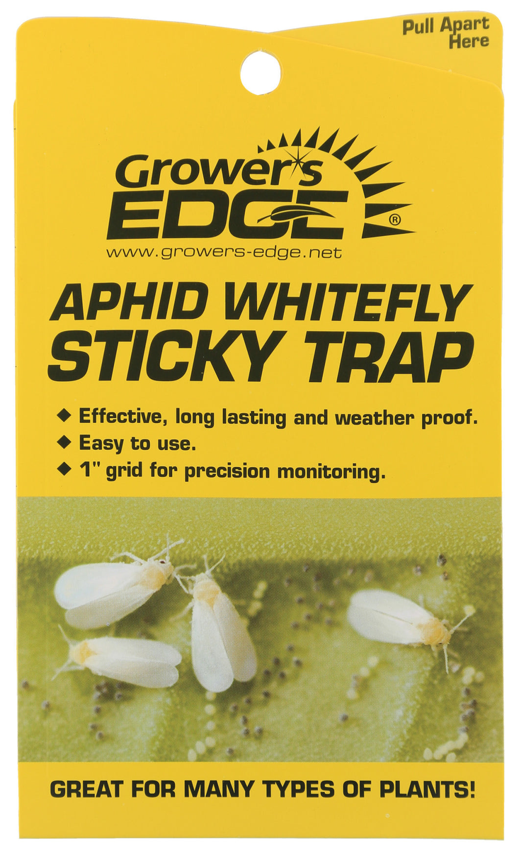 Sticky Trap Aphid Whitefly
