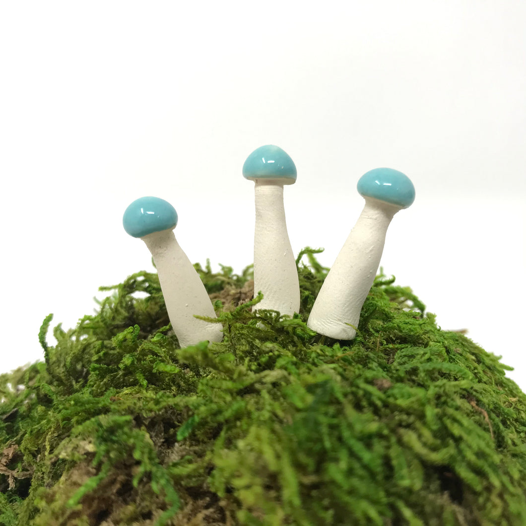 Miniature Mushroom: Light Blue Spruce