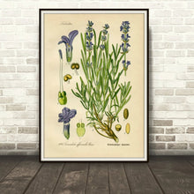 Load image into Gallery viewer, Lavender Botanical Drawing In A Simple Black Frame Leaning Against A Brick Wall