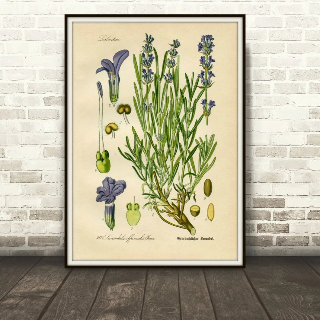 Lavender Botanical Drawing In A Simple Black Frame Leaning Against A Brick Wall