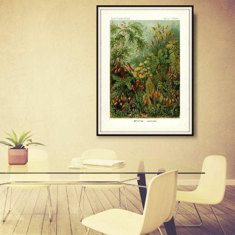 Ernst Haeckel Forest Moss Plate 72 Print Hanging In A Conference Room