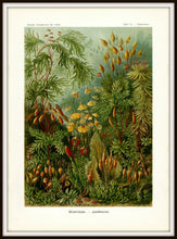 Load image into Gallery viewer, Ernst Haeckel Forest Moss Plate 72 Print Simple Black Metal Frame