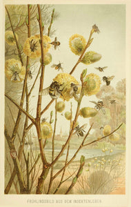 Honeybees on Pussywillow Giclee Print