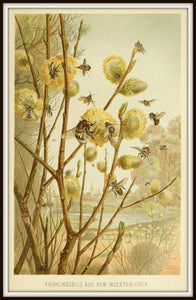 Honey Bees on Pussy Willow in Spring Framed In Simple Black Metal Frame