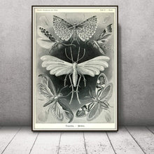 Load image into Gallery viewer, Ernst Haeckel Moths Tineida Art Print Framed Leaning Against A  Wall
