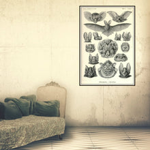 Load image into Gallery viewer, Ernst Haeckel Vampire Bats Chiroptera Print Framed Haning In A Dressing Room