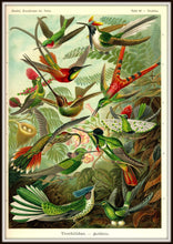 Load image into Gallery viewer, Ernst Haeckel Hummingbirds Plate #99 In A Simple Black Metal Frame