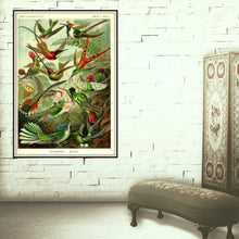 Load image into Gallery viewer, Ernst Haeckel Hummingbirds Plate #99 Framed Hanging In A Ladies Dressing Room
