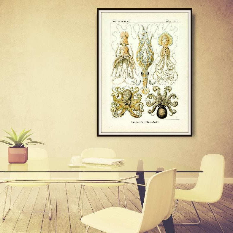 Ernst Haeckel Octopus Scientific Illustration Art Print In A Conference Room