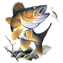 Load image into Gallery viewer, solartrans walleye feeding on the rocks t-shirt