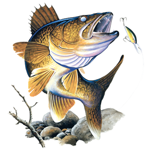 solartrans walleye feeding on the rocks t-shirt