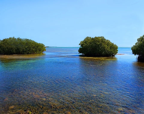 Three Mangroves