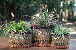 Redwoods - Plant Basket Set