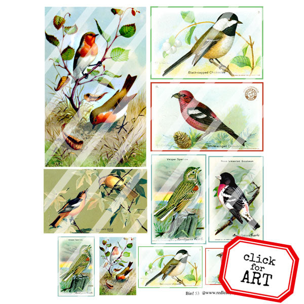 Bird Collage Sheets