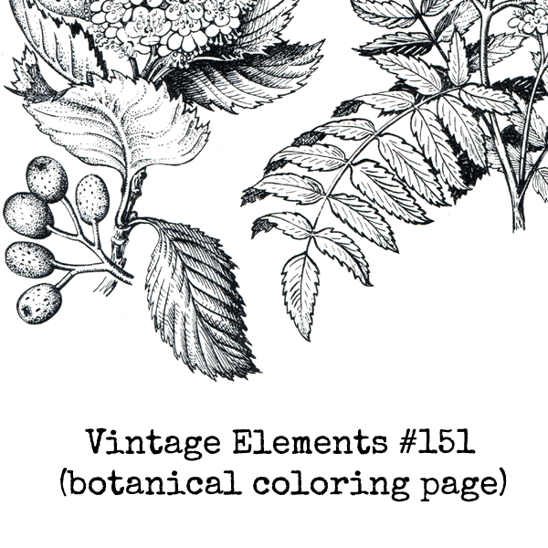 Vintage Elements 151 Coloring Page Collage Sheet