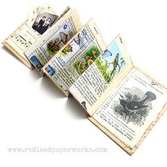 Nature Study Handmade Accordian Book