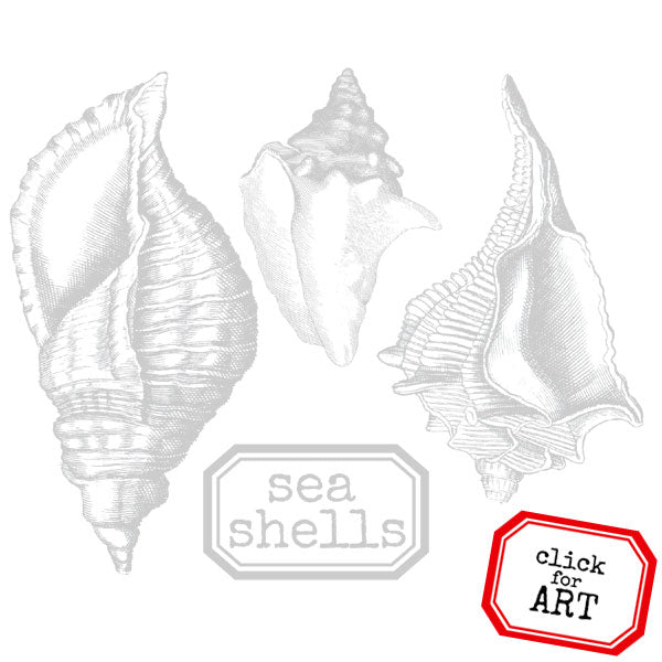 Sea Shells Rubber Stamp