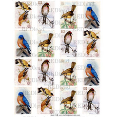 Bird Collage Sheet 15