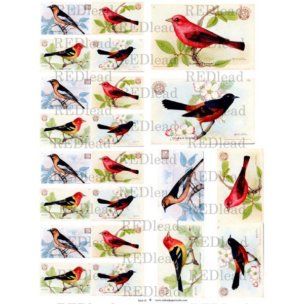 Collage Bird Sheet 18
