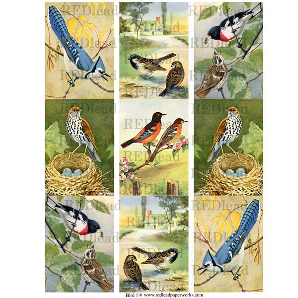 Bird Collage Sheet 1